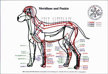 Lehrtafel - Meridiane Hund APM