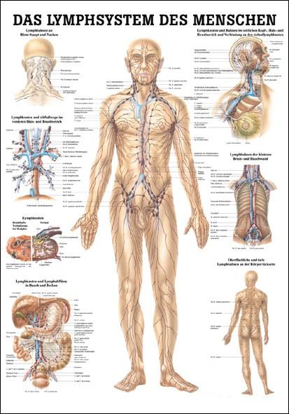 Lehrtafel - Lymphsystem