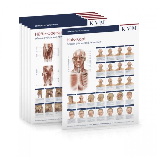 Lernposter Anatomie - 6er Set
