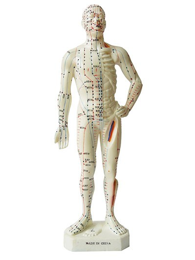 Modell Akupunkturmodell Mann - 26 cm