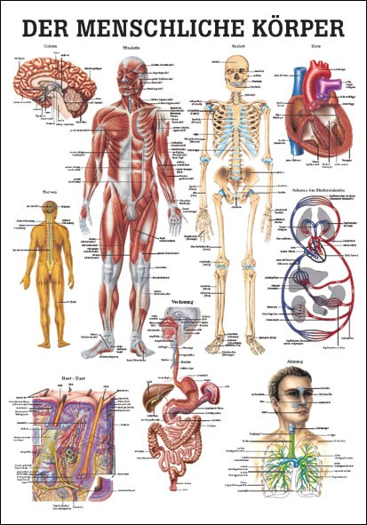 Lehrtafel - Der Menschliche Körper - 24 x 34