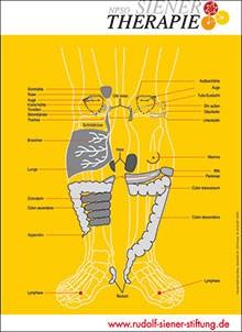 Lehrtafel - NPSO Siener-Therapie - Organübersicht