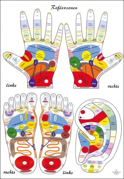 Lehrtafel - Reflexzonen-Kombi - Füße, Hände + Ohr