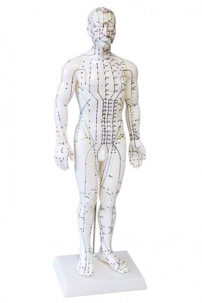 Modell Akupunkturmodell Mann - 50 cm